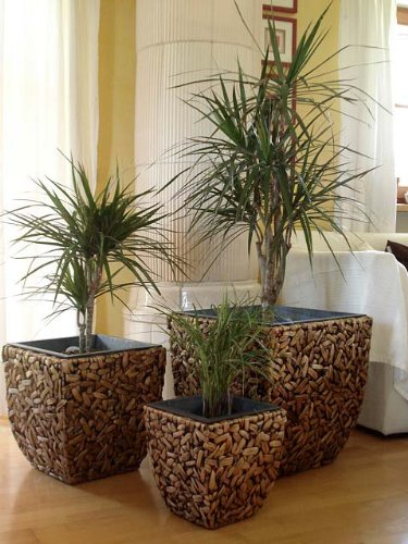 3er Set Wasserhyazinthe Blumenkübel Übertöpfe Pflanzkübel ...