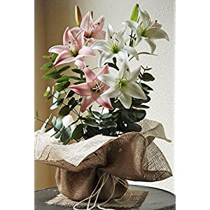 Dexon Power Burlap Pot Wrapping 24 x 24in Ivory/Natural 116