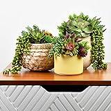 Seeko Artificial Succulents - 14 Pack - Create