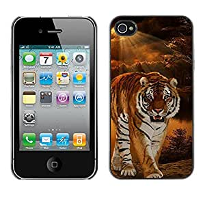 Qstar Arte & diseño plástico duro Fundas Cover Cubre Hard Case Cover para Apple iPhone 4 / iPhone 4S / 4S ( Tiger Night Sunset Wilderness Ray Sun)
