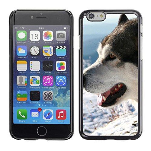 "Premio Sottile Slim Cassa Custodia Case Cover Shell // V00002852 alaskan malamute dog // Apple iPhone 6 6S 6G 4.7"""