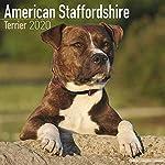 American Staffordshire Terrier Calendar - Dog Breed Calendars - 2019 - 2020 Wall Calendars - 16 Month by Avonside 4