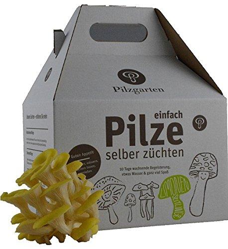 Pilzzucht-Set Limonenseitling Pilzgarten