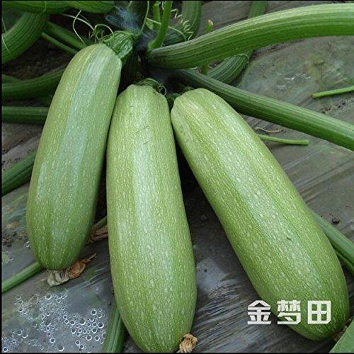 10pcs/lot marrow;summer squash, seeds quash Seed Vegetable Fruits Vegetables Seasons Melon The Of Zucchini Seeds High Yield 2 ()