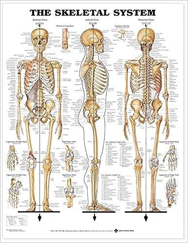 The Skeletal System Anatomical Chart 9781587790621 Medicine