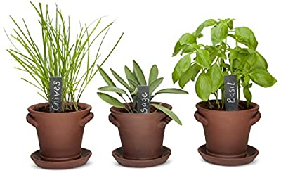 Window Garden Rustic Charm Herb Trio Kit with Planter Pots, Slate Markers, Fiber Soil, Germination Bags, Basil, Chive and Sage Seeds
