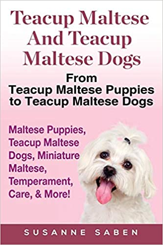 Buy Teacup Maltese And Teacup Maltese Dogs: From Teacup Maltese