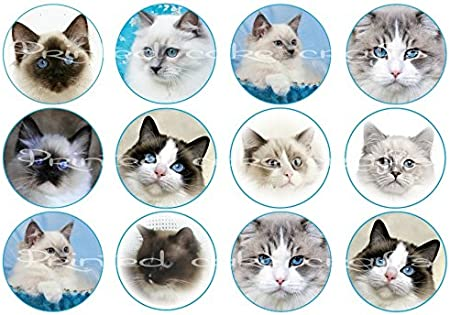 12 Edible Ragdoll Cats Blue Eyed Cats Images Icing Cupcake Toppers Uncut Amazon Co Uk Kitchen Home