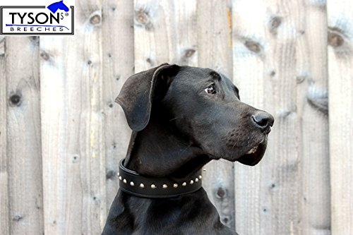 Hundehalsband Schwarz Gr.M 39-44 cm Lederhalsband Nietenhalsband Nieten EXTRA BREIT Halsband Schwarz Leder 39-44 CM