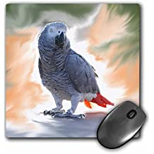 3dRose LLC 8 x 8 x 0.25 Inches Mouse Pad, African Grey Parrot (mp_4030_1)