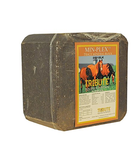 51NJedCILzL - Kalmbach Feeds Min-Plex Trace Mineral Block for Horse, 25 lb