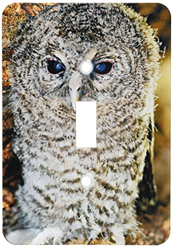 - 3dRose LLC lsp_9903_1 Tawny Owl, Strix Aluco One Month Young Owl Aragon Spain, Single Toggle Switch