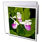 3dRose MN, Itasca SP, Showy Lady-Slipper flower - US27 PHA0000 - Peter Hawkins - Greeting Cards, 6 x 6 inches, set of 6 (gc_92113_1)