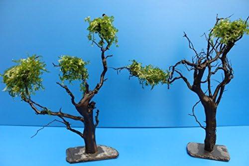 Moorkien garnelenstämme en pizarras-raíces