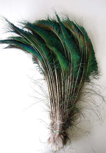 Kayso 100 piece peacock swords natural feathers 10 to 14 for Where can i buy peacock feathers craft store