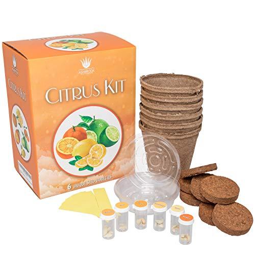 Citrus Tree Complete Starter Grow Kit | Fresh Fruit Grown at Home | Peat Pots, Premium Soil Wafer Discs, Water Trays & Labels | 6 Unique Citrus Fruits - Oranges, Lemons, Limes & More