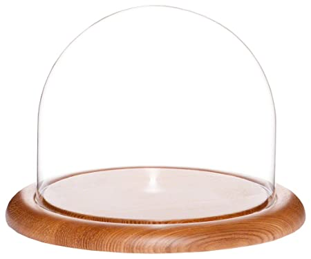 Plymor Brand 8 x 6.5 Glass Display Dome Cloche Oak Wood Base