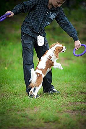 Puller 6490 Spielringe Ein Interaktives Spielzeug Fur Hunde Grossen