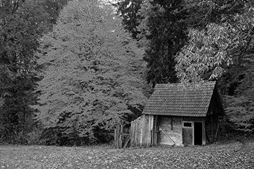 秋の森の木の小屋壁紙-自然壁紙-#38015 - 白黒の キャンバス ステッカー 印刷 壁紙ポスター はがせるシール式 写真 特大 絵画 壁飾り75cmx50cm
