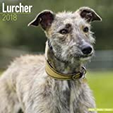 Lurcher Calendar - Dog Breed Calendars - 2017 - 2018 wall Calendars - 16 Month by Avonside