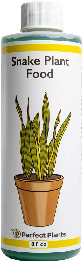 Perfect Plants Liquid Snake Plant Fertilizer   8oz. of Premium Concentrated Sansevieria Plant Food   Use with Mother-in-Laws Tongue and Other Snake Plant Varieties