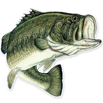 (Largemouth Bass Fishing Fish Vinyl Sticker - Car Phone Helmet - SELECT SIZE)