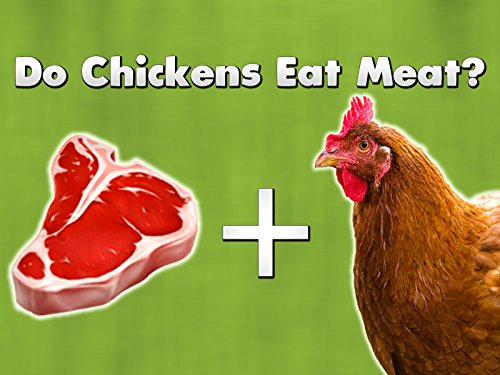- Do Chickens Eat Meat?
