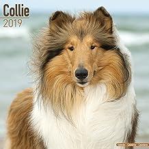 Collie Calendar 2019