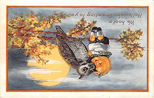 Owl, Pumpkin Kid Halloween Postcard Old Vintage Post -