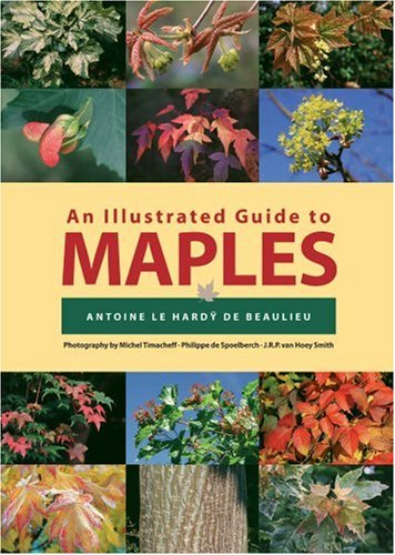 Read Online An Illustrated Guide to Maples (Illustrated Guides) ebook