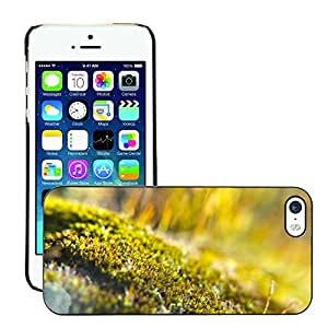 Hot Style Cell Phone PC Hard Case Cover // M00152237 Moss Macro Light Backlight // Apple iPhone 5 5S 5G