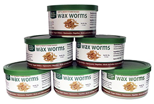 Bluebird Wax (Canned Wax Worms 35 g/ 1.2 oz (6 Pack))