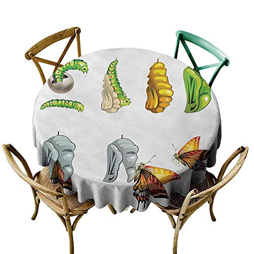 Mkedci Decorative Textured Fabric Tablecloth Butterfly Butterfly Stages with The Cocoon Life Cycle Nature Print Artistic Illustration Indoor Outdoor Camping Picnic D39 Multicolor