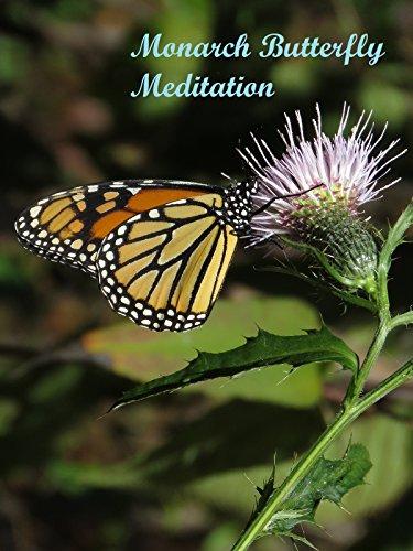 Monarch Butterfly Meditation -