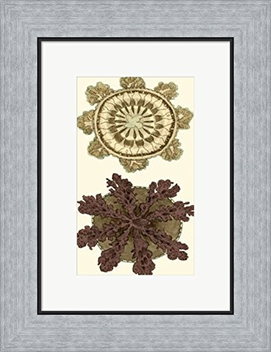 Jewels of the Sea VI by Frederick P. Nodder Framed Art Print Wall Picture, Flat Silver Frame, 13 x 17 inches - Nodder Jewels