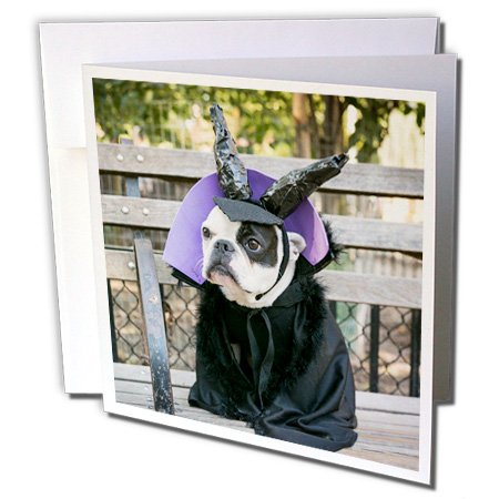 Danita Delimont - Halloween - New York City. Pet Halloween contest at Thompkins Square Park. - 6 Greeting Cards with envelopes