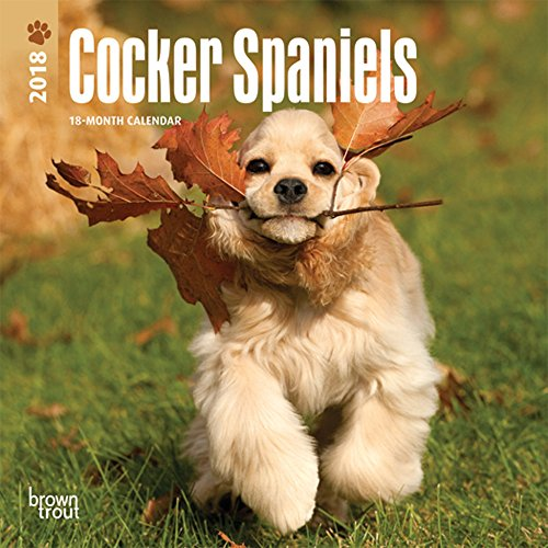 - Cocker Spaniels 2018 7 x 7 Inch Monthly Mini Wall Calendar, Animals Mixed Dog Breeds