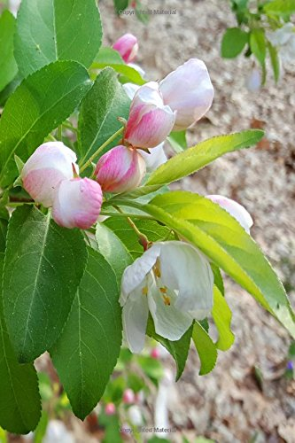 Download Journal Spring Flower Buds Ready To Open: (Notebook, Diary, Blank Book) (Flower Photo Journals Notebooks Diaries) PDF