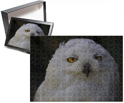 Photo Jigsaw Puzzle of Snowy Owl (Snowy Owl Photo)