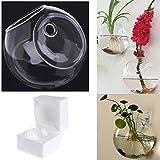 Hacloser Glass Vase for Flower Round Wall Hanging Vase Decor Hydroponic Terrarium Fish Tanks Potted Plant Flower Pot (Diameter 8CM)