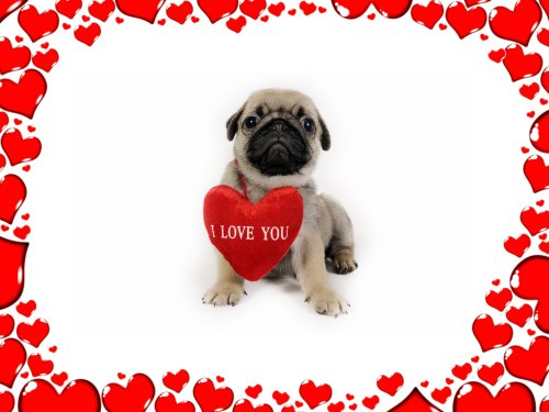 Valentines Day I Just Wanted To Say I Love You Great Book For