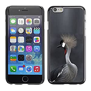FlareStar Colour Printing Bird Fur Grey Hair Head Nature Gray cáscara Funda Case Caso de plástico para Apple (5.5 inches!!!) iPhone 6 Plus