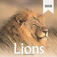 """Lions: 2021 Wall Calendar - Mini size 7"""" x 7"""" - 12 Months"""