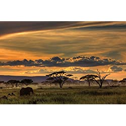 JP London SPMUR1X42438 Jpl & Amnon Eichelberg Present Africa African Animals Safari Plains Dusk 36In x 24In Peel & Stick Fully Removable Wall Poster Mural Fully Removable Peel & Stick Wall Art
