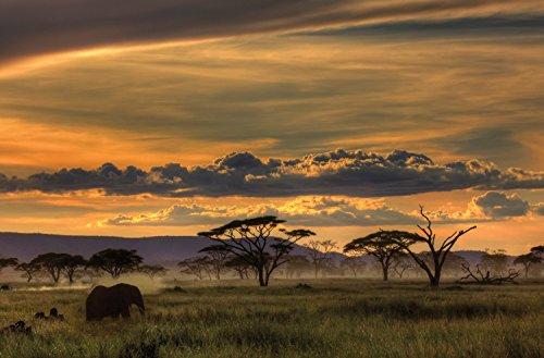 JP London SPMUR1X42438 Jpl & Amnon Eichelberg Present Africa African Animals Safari Plains Dusk 36In x 24In Peel & Stick Fully Removable Wall Poster Mural Fully Removable Peel & Stick Wall Art