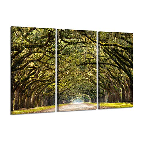 - Oak Tree Canvas Pictures Prints: Avenue Pathway Artwork Painting on Canvas Wall Art for Bedroom (26'' x 16'' x 3 Panels)