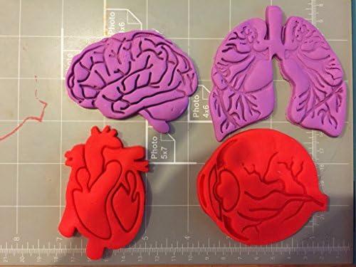 Tejido humano anatomía cortador de galletas (Juego de 4): Amazon ...