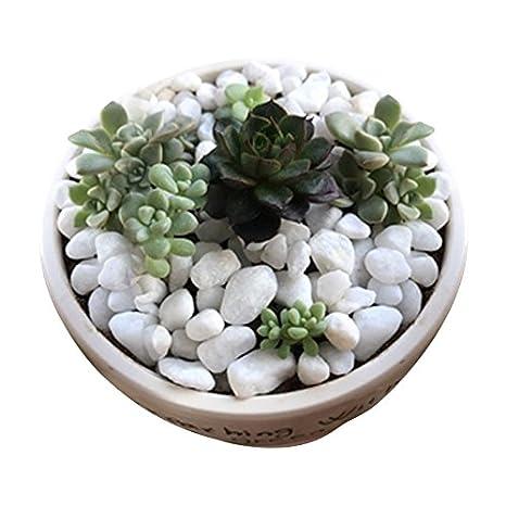 White Stones Rock Crystal Sands for Bonsai Succulent Plants Ornament//Bottom Decoration//Aquarium Turtle Tank Landscape 1.5 Lb Wayber Decorative Stones