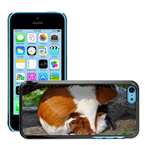 hot-style-cell-phone-pc-hard-case-cover-m00135118-guinea-pig-pet-nager-apple-iphone-5c