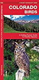Colorado Birds: A Folding Pocket Guide to Familiar Species (A Pocket Naturalist Guide)